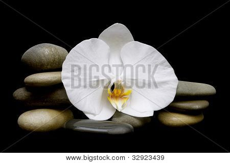 Spa Composition On A Black Background