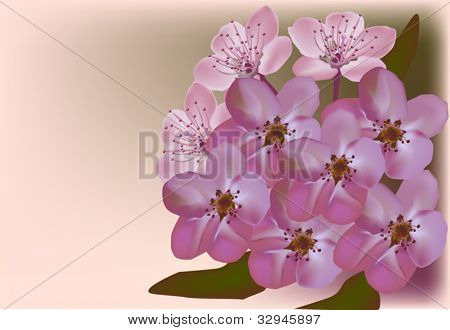 illustration with plum flowers on light background