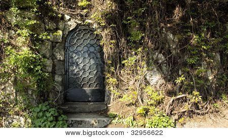 Mysteru Door In The Forest