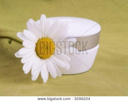 Cream And Camomile