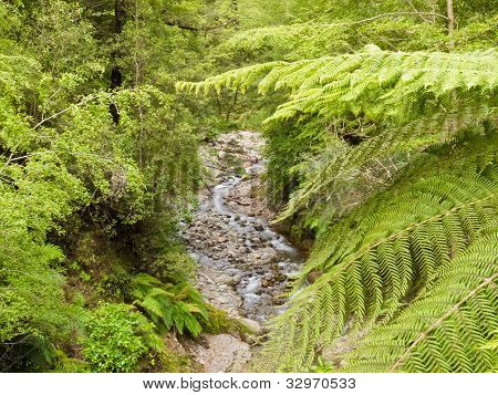 Forest creek in lush rainforest jungle of NZ