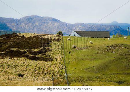 Mountain and sheep farm