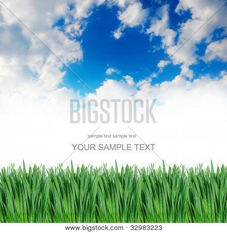 grünes Gras unter blauen Himmel