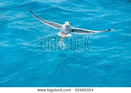 bird seagull on sea water in blue ocean