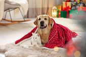 Adorable Dog And Cat Together Under Blanket At Room Decorated For Christmas. Cute Pets poster