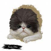 Persian Kitten With Fluffy Fur, Digital Art Illustration. Persian Longhair Watercolor Portrait In Cl poster