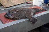 Norway Sea Caught Fish Norway North Scandinavia poster