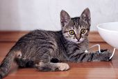 Cute Little Cat Of Tabby Color Plays With White Wire Of Electronic Gadget. Big Scared Eyes Of Pretty poster