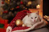 Cute White Cat Under Blanket In Room Decorated For Christmas. Adorable Pet poster