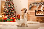 Adorable Dog And Cat Together At Room Decorated For Christmas. Cute Pets poster