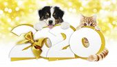 2020 Happy New Year Number Text, Dog Puppy And Cat Pet With Golden Christmas Ribbon Bow Isolated On  poster