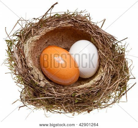 birds nest with eggs inside isolated on white
