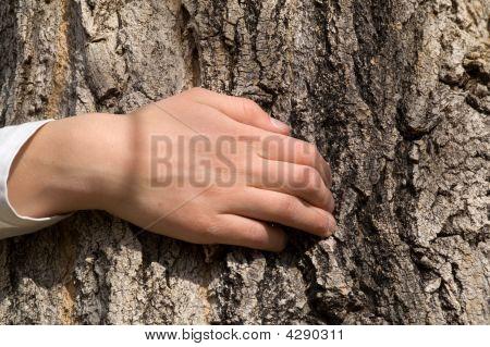 Young Tree Hugger