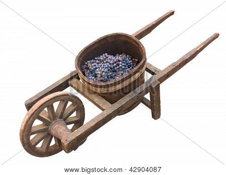 Old Wheelbarrow For Grape Transport
