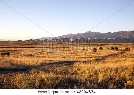 Grass And Sand At Sunset