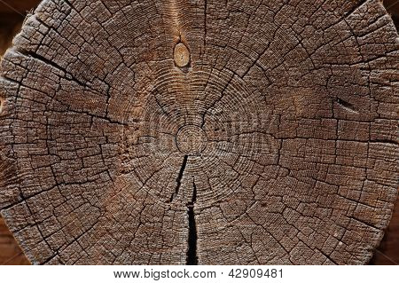 Slice Of Old Logs