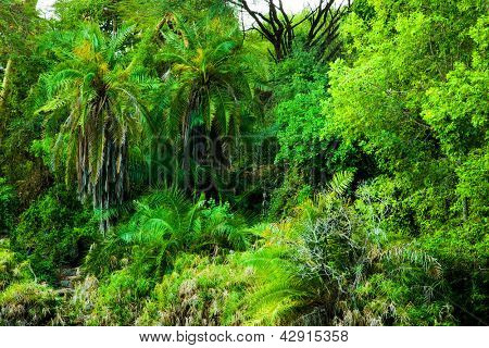 Jungle, bush trees and plants background in Africa. Tsavo West, Kenya