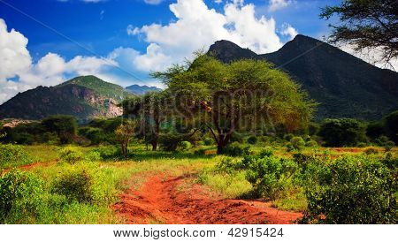 Red ground road and bush with savanna panorama landscape in Africa. Tsavo West, Kenya.