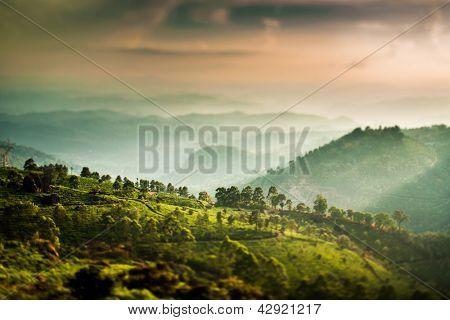 Landscape of the tea plantations in India, Kerala Munnar. (tilt shift lens)