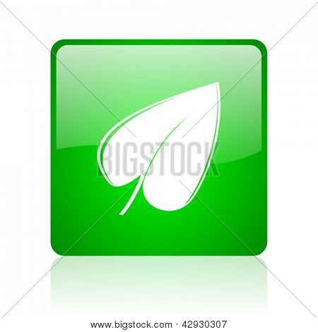 leaf green square web icon on white background