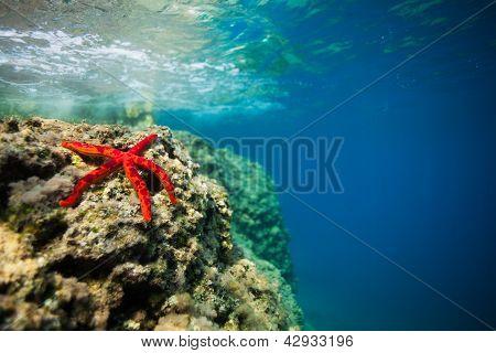 Beautiful Red Starfish On Rock  Underwater