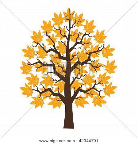 Árvore Maple com folhagem laranja