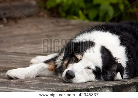 Lazy Dog Days Of Summer