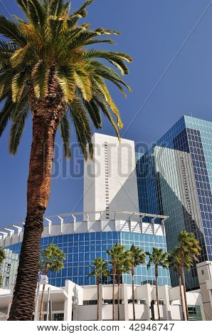 Palm tree and office tower