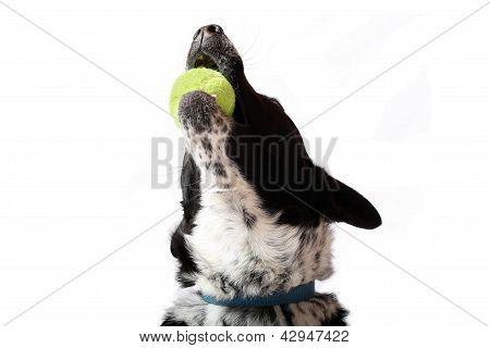 Ball Joy