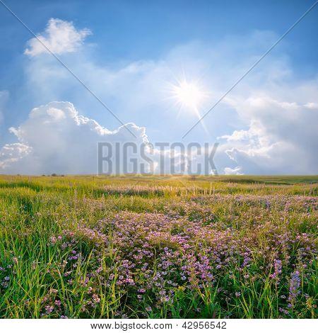 Spring Landscape With Flower