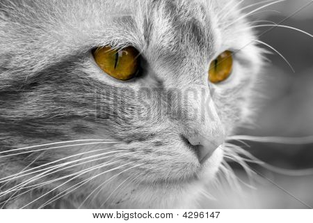 Discolored Cat