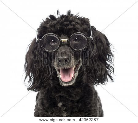 Close-up of a Poodle, 5 years old, wearing glasses repaired with tape in front of white background