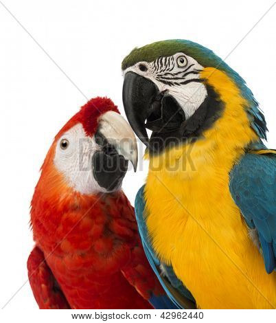 Close-up of a Blue-and-yellow Macaw, Ara ararauna, 30 years old, and Green-winged Macaw, Ara chloropterus, 1 year old, in front of white background