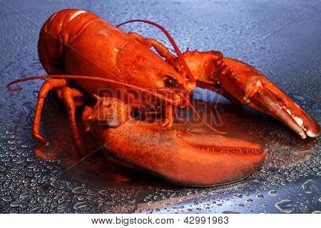 Red lobster on blue background