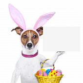picture of bunny costume  - dog dressed up as bunny with easter basket and a banner - JPG
