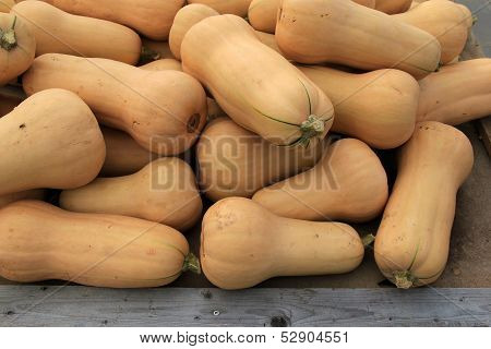 Delicious butternut squash