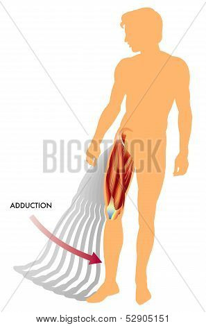 Adduction