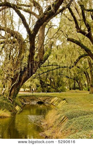 Old Oak With Spanish Moss Over Canal