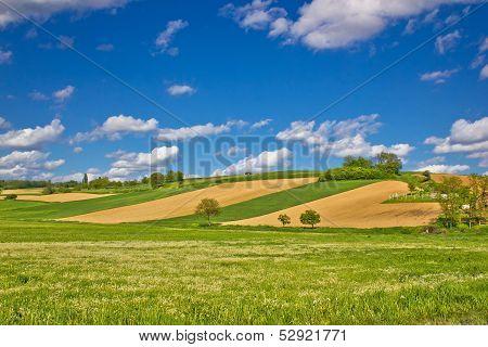 Green Agricultural Landscape Under Blue Sky