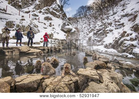 NAGANO - FEBRUARY 5: Tourist observe bathing monkeys at Jigokudani Monkey Park February 5, 2013 in Nagano, JP.