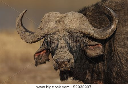 Muddy Horns