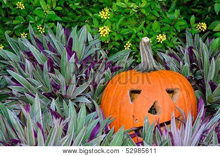 Jack-o-lantern in purple plants