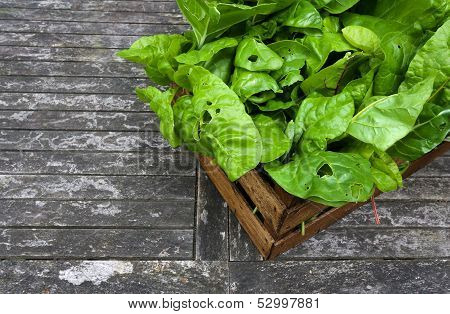 A Crate Of Organic Grown Rainbow Chard