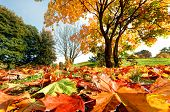 picture of sunny season  - Autumn - JPG