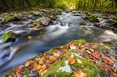 stock photo of smoky mountain  - Mountain stream in Great Smoky Mountain National Park with fall colors on display - JPG