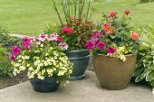 image of plant pot  - Various sizes of ceramic flower pots with colorful flowers in full blossom - JPG