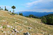 foto of mica  - Piatra Craiului National Park in Romania  - JPG