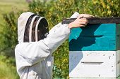 picture of fumes  - Side view of beekeeper placing fume board on hive - JPG