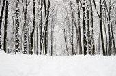 stock photo of snowy-road  - beautiful winter forest  and the road - JPG