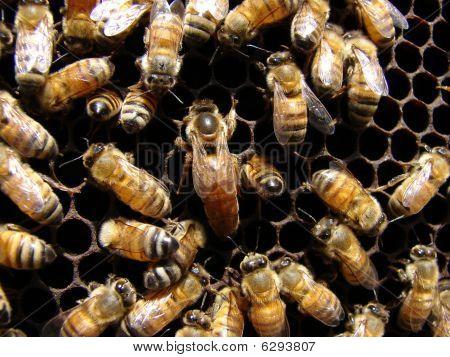 Qween Bee